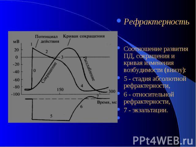 Рефрактерность Соотношение развития ПД, сокращения и кривая изменения возбудимости (внизу): 5 - стадия абсолютной рефрактерности, 6 - относительной рефрактерности, 7 - экзальтации.