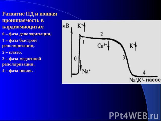 Развитие ПД и ионная проницаемость в кардиомиоцитах: Развитие ПД и ионная проницаемость в кардиомиоцитах: 0 – фаза деполяризации, 1 – фаза быстрой реполяризации, 2 – плато, 3 – фаза медленной реполяризации, 4 – фаза покоя.