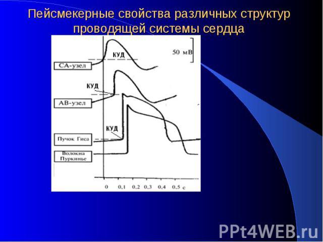 Пейсмекерные свойства различных структур проводящей системы сердца