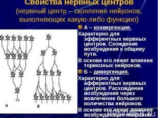 Свойства нервных центров (нервный центр – скопление нейронов, выполняющих какую-