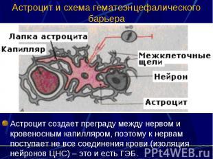 Астроцит и схема гематоэнцефалического барьера Астроцит создает преграду между н