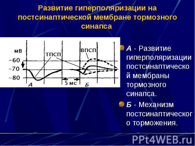 Развитие гиперполяризации на постсинаптической мембране тормозного синапса А - Развитие гиперполяризации постсинаптической мембраны тормозного синапса. Б - Механизм постсинаптического торможения.