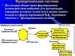 Функциональная система На сегодня общая схема формирования взаимодействия нейрон