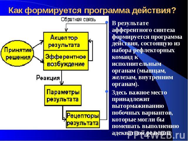 Как формируется программа действия? В результате афферентного синтеза формируется программа действия, состоящую из набора рефлекторных команд к исполнительным органам (мышцам, железам, внутренним органам). Здесь важное место принадлежит вытормаживан…