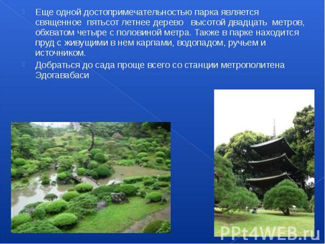 Еще одной достопримечательностью парка является священное пятьсот летнее дерево высотой двадцать метров, обхватом четыре с половиной метра. Также в парке находится пруд с живущими в нем карпами, водопадом, ручьем и источником…