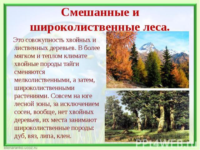 Это совокупность хвойных и лиственных деревьев. В более мягком и теплом климате хвойные породы тайги сменяются мелколиственными, а затем, широколиственными растениями. Совсем на юге лесной зоны, за исключением сосен, вообще, нет хвойных деревьев, их…