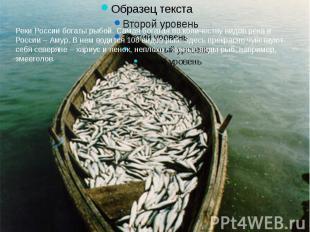 Реки России богаты рыбой. Самая богатая по количеству видов река в России – Амур