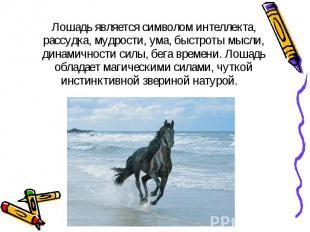 Лошадь является символом интеллекта, рассудка, мудрости, ума, быстроты мысли, ди