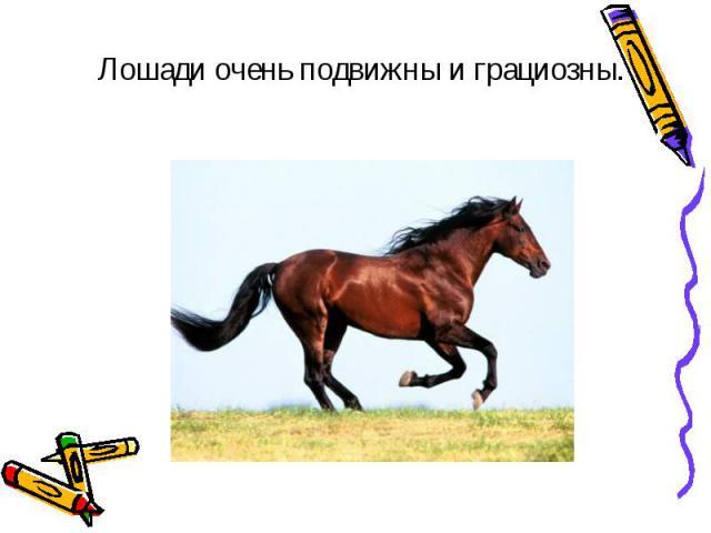 Лошади очень подвижны и грациозны. Лошади очень подвижны и грациозны.
