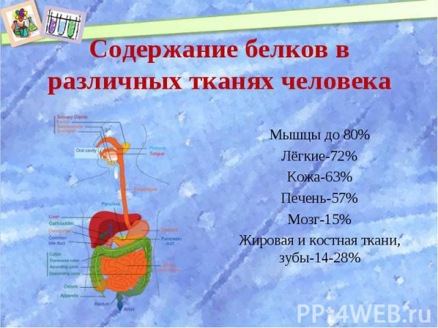 Мышцы до 80% Мышцы до 80% Лёгкие-72% Кожа-63% Печень-57% Мозг-15% Жировая и костная ткани, зубы-14-28%