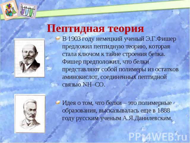 В 1903 году немецкий ученый Э.Г.Фишер предложил пептидную теорию, которая стала ключом к тайне строения белка. Фишер предположил, что белки представляют собой полимеры из остатков аминокислот, соединенных пептидной связью NH–CO. В 1903 году немецкий…
