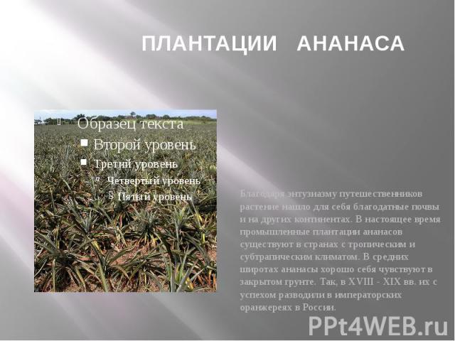 ПЛАНТАЦИИ АНАНАСА Благодаря энтузиазму путешественников растение нашло для себя благодатные почвы и на других континентах. В настоящее время промышленные плантации ананасов существуют в странах с тропическим и субтрапическим климатом. В средних широ…