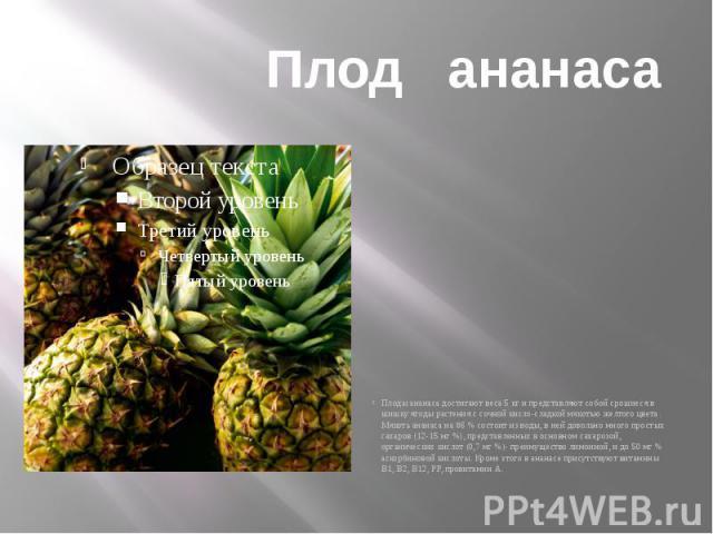 Плод ананаса Плоды ананаса достигают веса 5 кг и представляют собой срошиеся в шишку ягоды растения с сочной кисло-сладкой мякотью желтого цвета. Мякоть ананаса на 86 % состоит из воды, в ней довольно много простых сахаров (12-15 мг %), представленн…