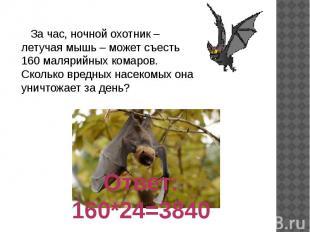 За час, ночной охотник – летучая мышь – может съесть 160 малярийных комаров. Ско