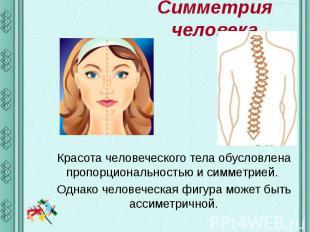 Симметрия человека Красота человеческого тела обусловлена пропорциональностью и