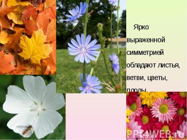 Ярко выраженной симметрией обладают листья, ветви, цветы, плоды. Ярко выраженной симметрией обладают листья, ветви, цветы, плоды.