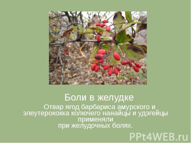 Боли в желудке Боли в желудке Отвар ягод барбариса амурского и элеутерококка колючего нанайцы и удэгейцы применяли при желудочных болях.