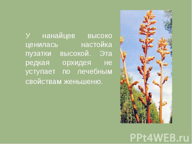 У нанайцев высоко ценилась настойка пузатки высокой. Эта редкая орхидея не уступает по лечебным свойствам женьшеню.