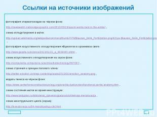 Ссылки на источники изображений фотография сперматозоидов на чёрном фоне: http:/