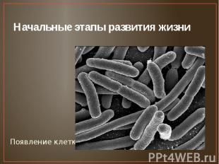 Начальные этапы развития жизни Появление клетки