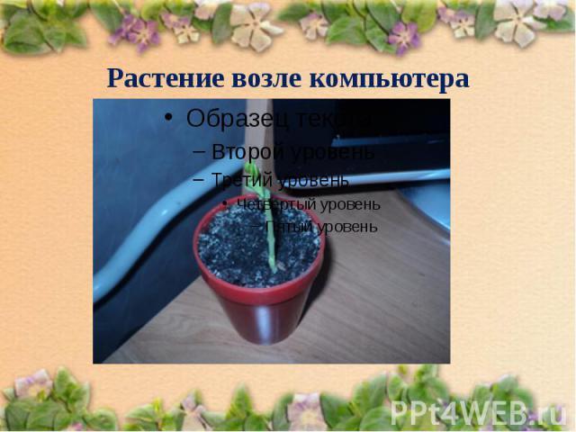 Растение возле компьютера
