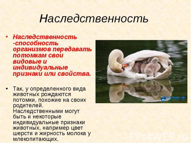 Наследственность -способность организмов передавать потомкам свои видовые и индивидуальные признаки или свойства. Наследственность -способность организмов передавать потомкам свои видовые и индивидуальные признаки или свойства. Так, у определенного …
