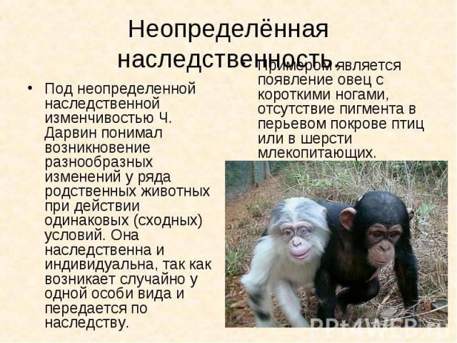 Под неопределенной наследственной изменчивостью Ч. Дарвин понимал возникновение разнообразных изменений у ряда родственных животных при действии одинаковых (сходных) условий. Она наследственна и индивидуальна, так как возникает случайно у одной особ…