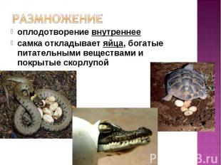 оплодотворение внутреннее оплодотворение внутреннее самка откладывает яйца, бога