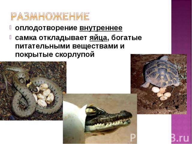 оплодотворение внутреннее оплодотворение внутреннее самка откладывает яйца, богатые питательными веществами и покрытые скорлупой