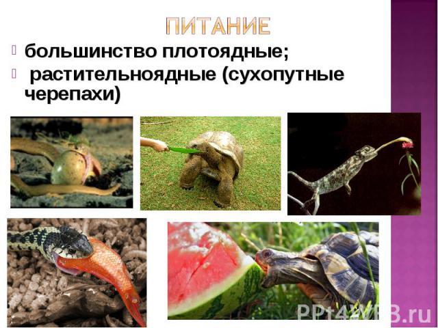 большинство плотоядные; большинство плотоядные; растительноядные (сухопутные черепахи)