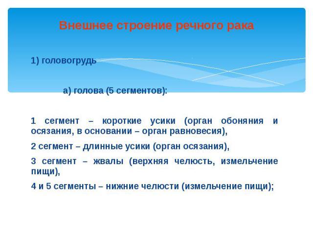 Внешнее строение речного рака 1) головогрудь а) голова (5 сегментов): 1 сегмент – короткие усики (орган обоняния и осязания, в основании – орган равновесия), 2 сегмент – длинные усики (орган осязания), 3 сегмент – жвалы (верхняя челюсть, измельчение…