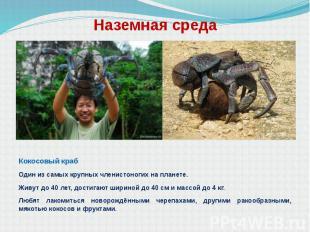 Наземная среда Кокосовый краб Один из самых крупных членистоногих на планете. Жи