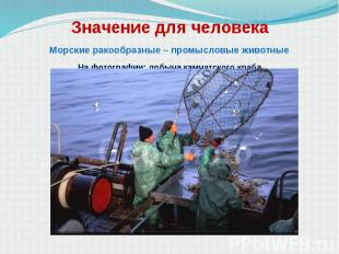 Значение для человека Морские ракообразные – промысловые животные На фотографии: