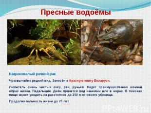 Пресные водоёмы Широкопалый речной рак Чрезвычайно редкий вид. Занесён в Красную