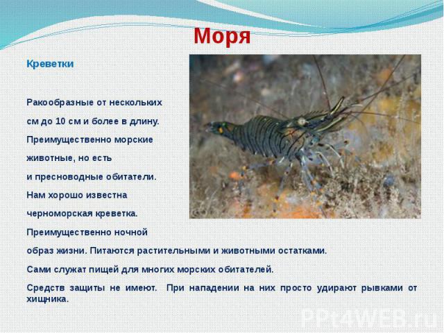 Моря Креветки Ракообразные от нескольких см до 10 см и более в длину. Преимущественно морские животные, но есть и пресноводные обитатели. Нам хорошо известна черноморская креветка. Преимущественно ночной образ жизни. Питаются растительными и животны…