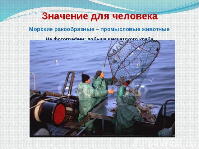 Значение для человека Морские ракообразные – промысловые животные На фотографии: добыча камчатского краба