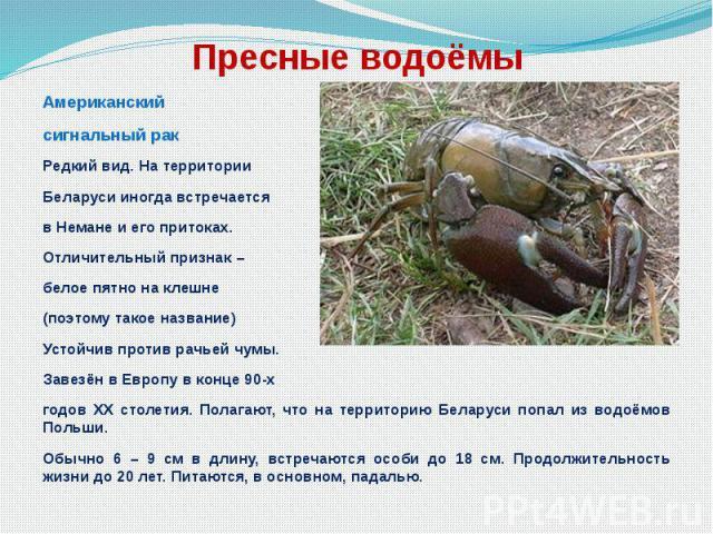Пресные водоёмы Американский сигнальный рак Редкий вид. На территории Беларуси иногда встречается в Немане и его притоках. Отличительный признак – белое пятно на клешне (поэтому такое название) Устойчив против рачьей чумы. Завезён в Европу в конце 9…