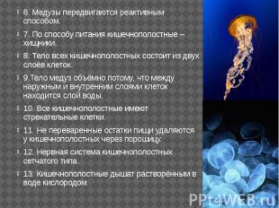 6. Медузы передвигаются реактивным способом. 6. Медузы передвигаются реактивным