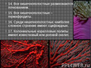 14. Все кишечнополостные размножаются почкованием. 14. Все кишечнополостные разм