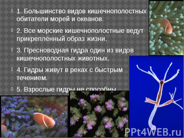 1. Большинство видов кишечнополостных – обитатели морей и океанов. 1. Большинство видов кишечнополостных – обитатели морей и океанов. 2. Все морские кишечнополостные ведут прикреплённый образ жизни. 3. Пресноводная гидра один из видов кишечнополостн…