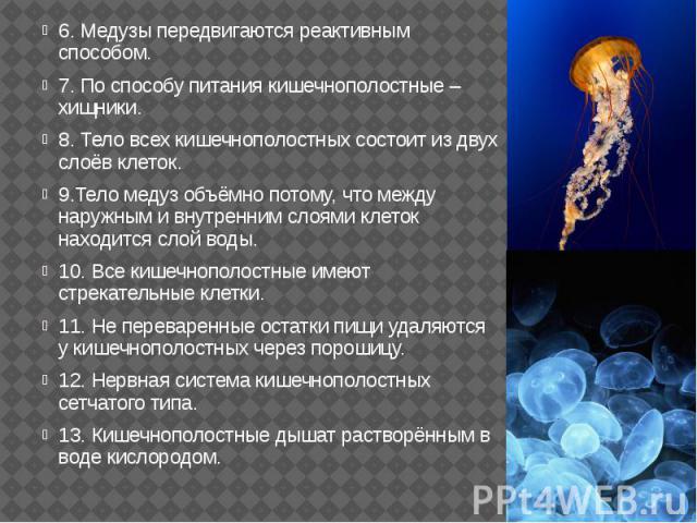 6. Медузы передвигаются реактивным способом. 6. Медузы передвигаются реактивным способом. 7. По способу питания кишечнополостные – хищники. 8. Тело всех кишечнополостных состоит из двух слоёв клеток. 9.Тело медуз объёмно потому, что между наружным и…