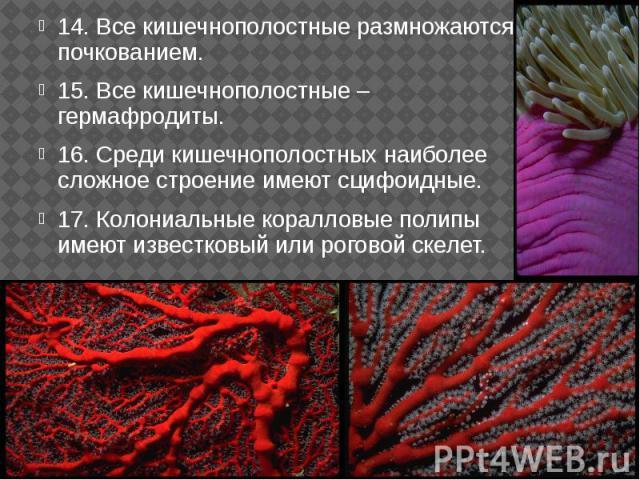 14. Все кишечнополостные размножаются почкованием. 14. Все кишечнополостные размножаются почкованием. 15. Все кишечнополостные – гермафродиты. 16. Среди кишечнополостных наиболее сложное строение имеют сцифоидные. 17. Колониальные коралловые полипы …