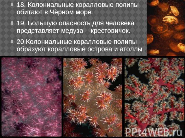 18. Колониальные коралловые полипы обитают в Чёрном море. 18. Колониальные коралловые полипы обитают в Чёрном море. 19. Большую опасность для человека представляет медуза – крестовичок. 20 Колониальные коралловые полипы образуют коралловые острова и…