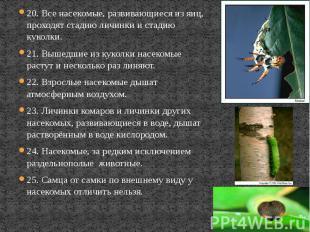 20. Все насекомые, развивающиеся из яиц, проходят стадию личинки и стадию куколк