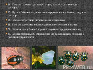 26. У жуков ротовые органы грызущие, а у комаров – колюще - сосущие. 26. У жуков