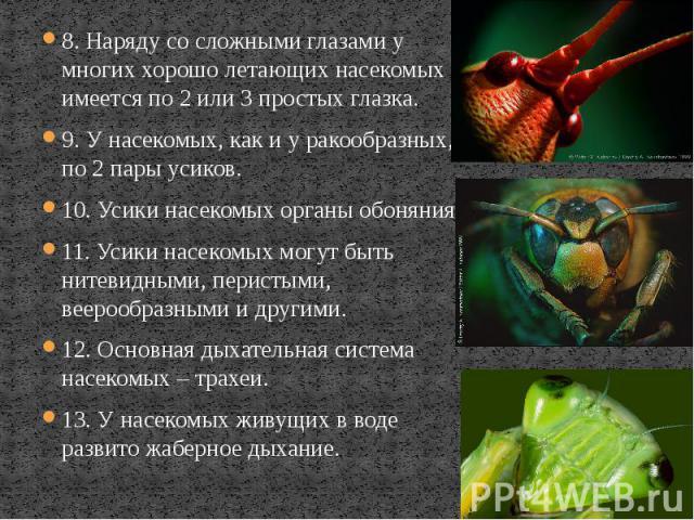 8. Наряду со сложными глазами у многих хорошо летающих насекомых имеется по 2 или 3 простых глазка. 8. Наряду со сложными глазами у многих хорошо летающих насекомых имеется по 2 или 3 простых глазка. 9. У насекомых, как и у ракообразных, по 2 пары у…