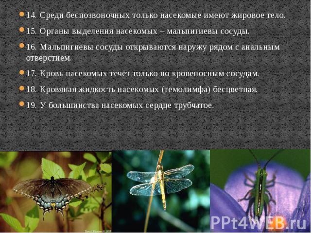 14. Среди беспозвоночных только насекомые имеют жировое тело. 14. Среди беспозвоночных только насекомые имеют жировое тело. 15. Органы выделения насекомых – мальпигиевы сосуды. 16. Мальпигиевы сосуды открываются наружу рядом с анальным отверстием. 1…