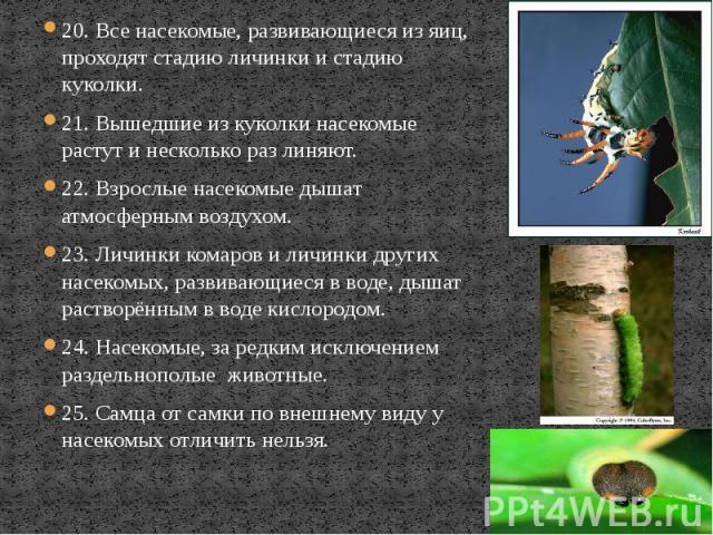 20. Все насекомые, развивающиеся из яиц, проходят стадию личинки и стадию куколки. 20. Все насекомые, развивающиеся из яиц, проходят стадию личинки и стадию куколки. 21. Вышедшие из куколки насекомые растут и несколько раз линяют. 22. Взрослые насек…