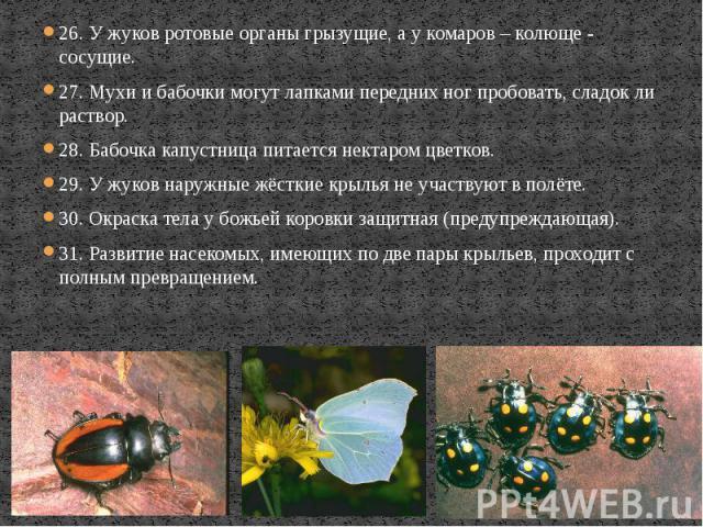 26. У жуков ротовые органы грызущие, а у комаров – колюще - сосущие. 26. У жуков ротовые органы грызущие, а у комаров – колюще - сосущие. 27. Мухи и бабочки могут лапками передних ног пробовать, сладок ли раствор. 28. Бабочка капустница питается нек…