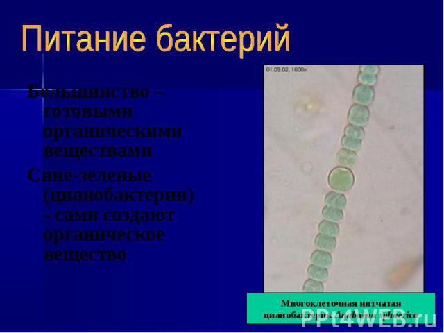 Большинство – готовыми органическими веществами Большинство – готовыми органическими веществами Сине-зеленые (цианобактерии) - сами создают органическое вещество